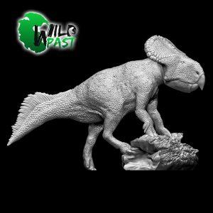 SW-003-Female-Protoceratops-1
